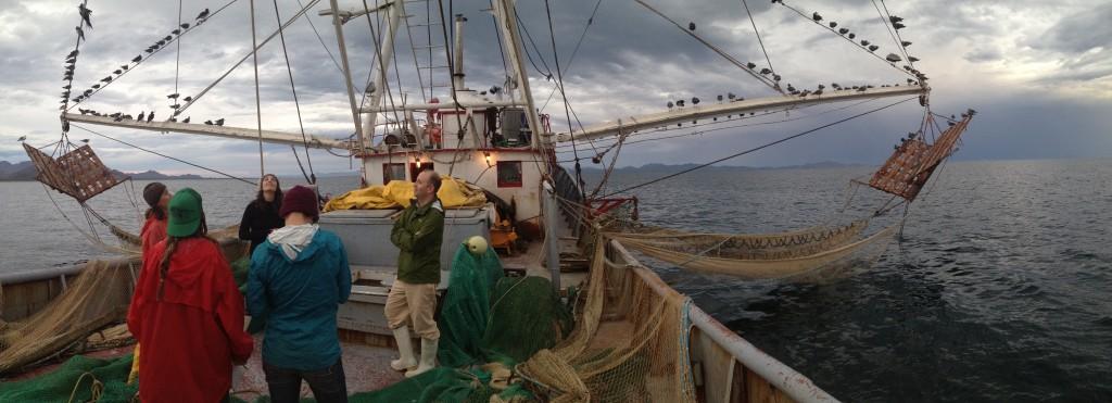 trawl 2